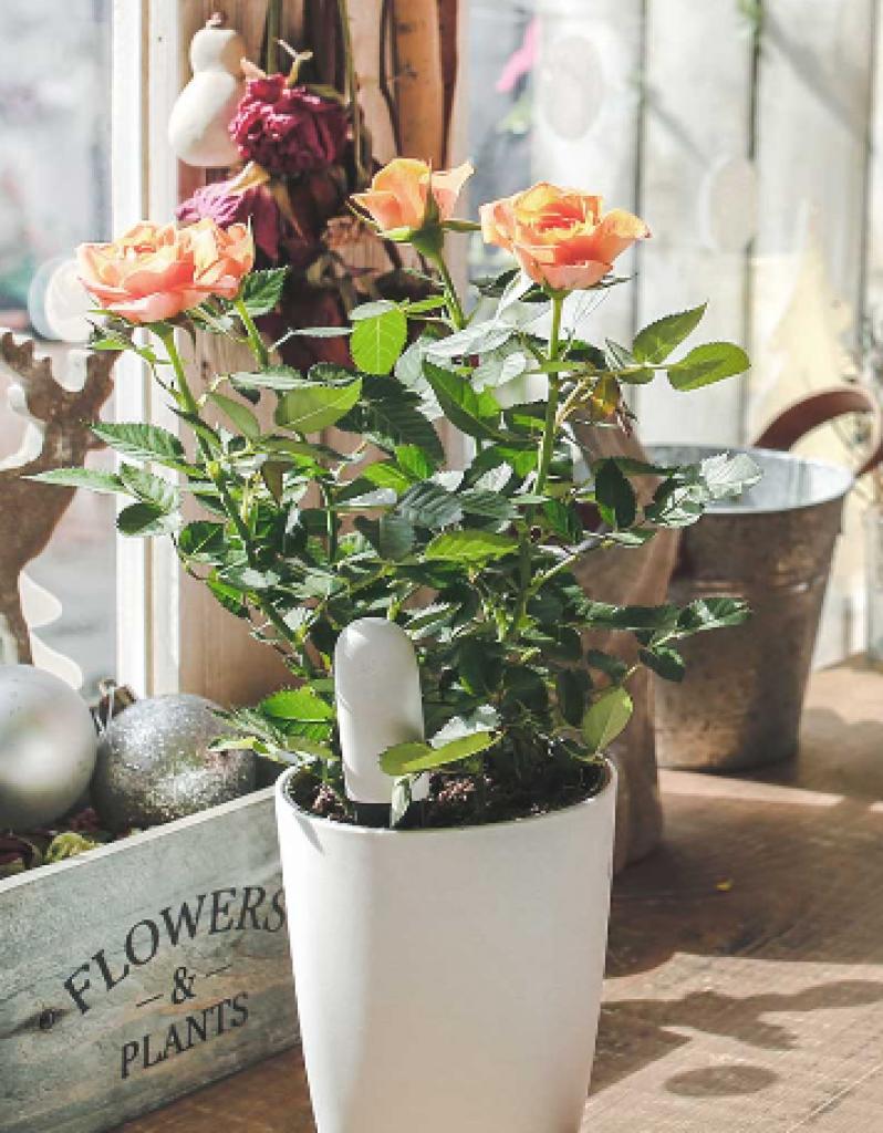 Xiaomi Mi Plant se o kytky sice nepostará, dohlédne však, abyste to udělali vy!