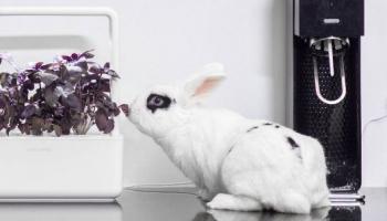 ClickAndGrow OU SmartGarden: mikro zahradničení pro geeky